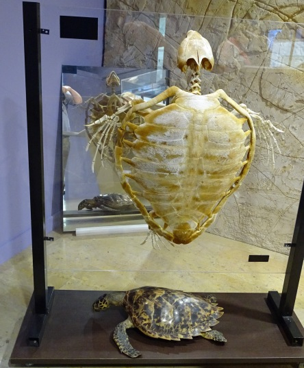 Ancient and Modern Day Tortoise