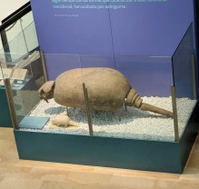 Ancient Glyptodon and Modern Day Armadillo