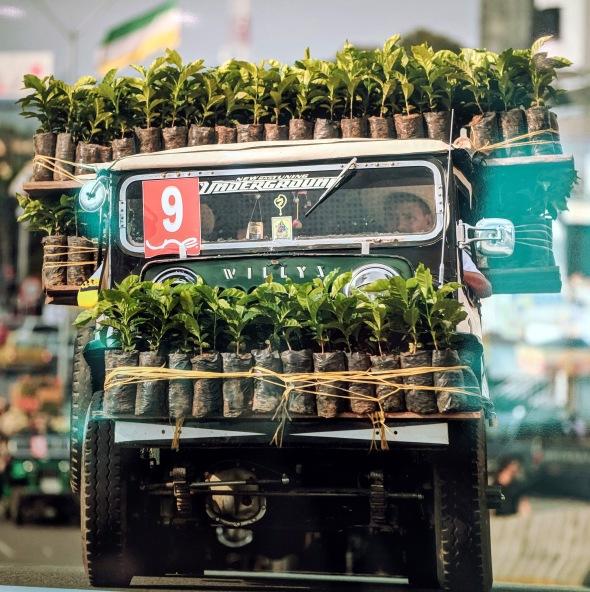 Moving Coffee Plants