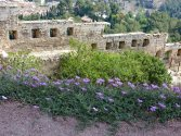 A small garden next to the ancient walls