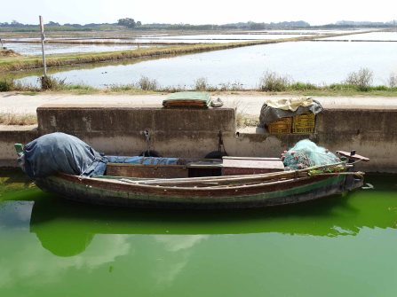 A Paddy Boat