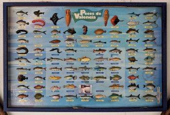 The Fish of Valencia