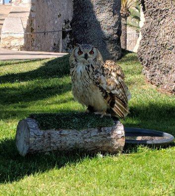 Bird of Prey from the Raptor Shelter of Peñiscola