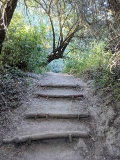 Steps along the trail