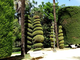The beautifully sculpted shrubs and trees of Parque Genovés
