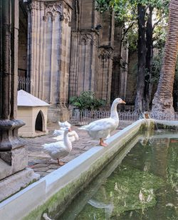 Two of the 13 geese kept at the cathedral.