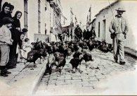 Bringing turkeys to market