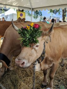 Farm animals, orchestras, folk groups and markets along with the decorated cows.