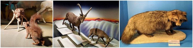 A small representation of the many regional animals beautifully displayed at the Natural History Museum