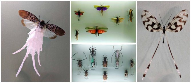 Specimens of insect, moth, bee and butterfly found around the world - Natural History Museum
