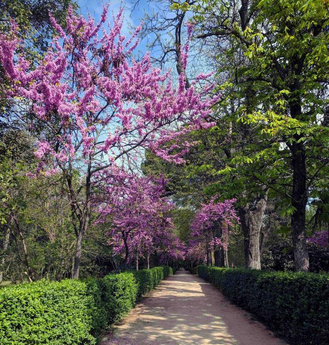 Springtime in El Retiro Park
